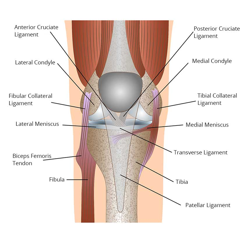 image of knee pain, knee replacement surgery